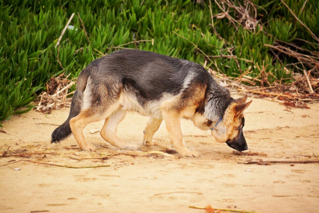 Spårande hundar kan rädda liv.