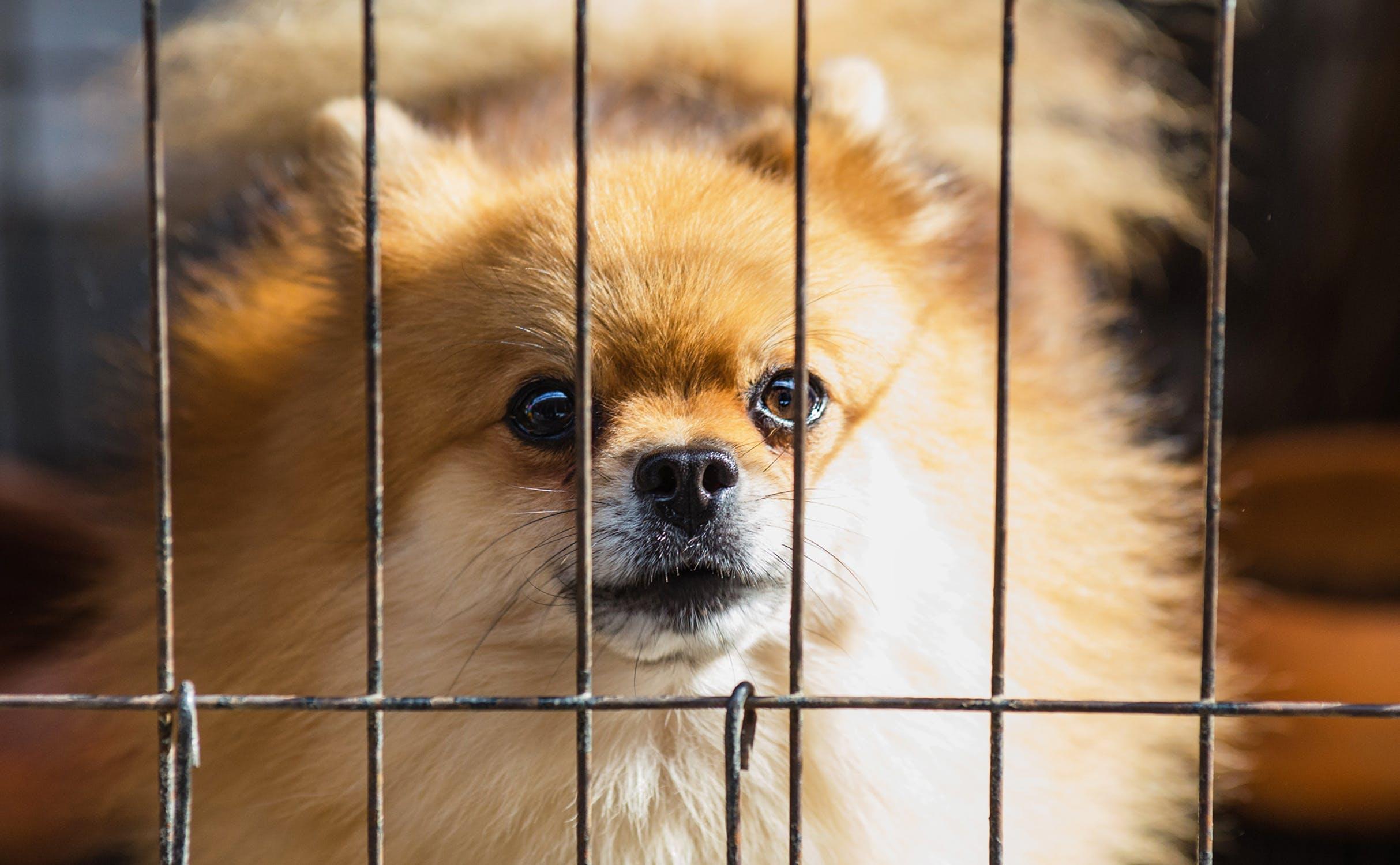 Hund i bur